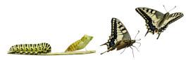 \digital-transformation-caterpilllar\